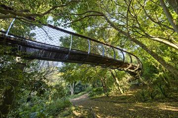 Kirstenbosch National Botanical Garden in Cape Town South Africa