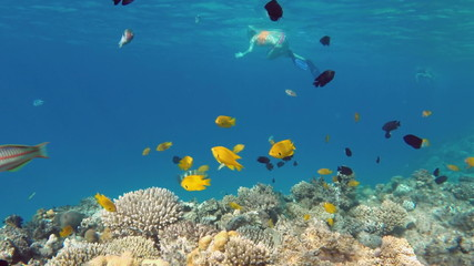 Two girl snorkelling underwater among of fish and corals
