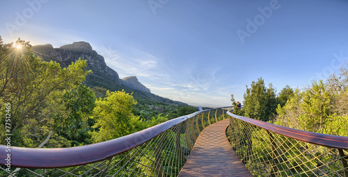In de dag Afrika Kirstenbosch National Botanical Garden in Cape Town South Africa