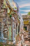 Ta Prohm Temple ancient tree roots, Angkor