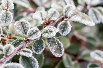 Closeup of frozen crystals on plant