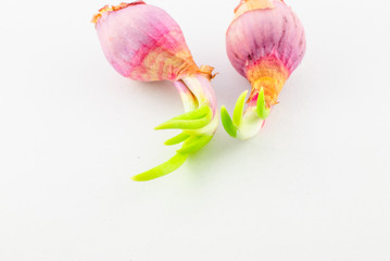 Red young onion