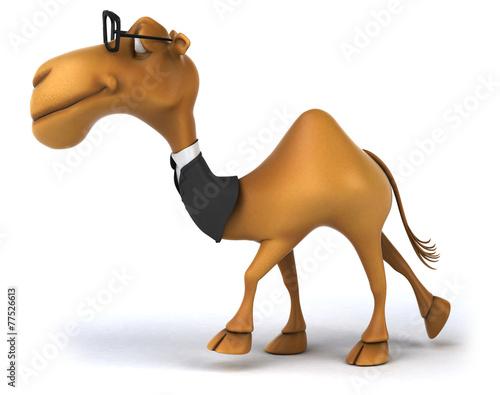 canvas print picture Fun camel