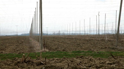 Abandoned field of hops in fall