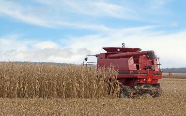 Harvesting a Cornfield