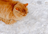 Vargant ginger tomcat sitting in the street  with snow poster