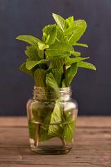 Fresh mint plant in jar