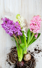 hyacinths on wooden surface