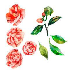 Flowers decorative. Vector flower.Flowers. Camellia, Rose.