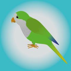 An illustration af a quaker parrot