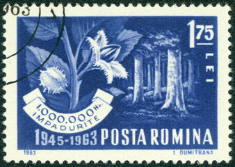 stamp printed in the Romania shows Beech Forest and Branch