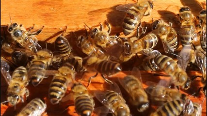 Ventilate the hive bees