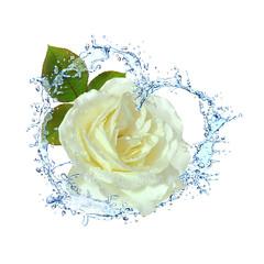 Blumen 344