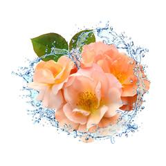 Blumen 345