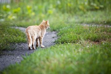 Vagrant cat