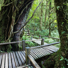 Tropical forest and wooden footpath