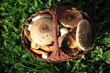 czech edible mushrooms