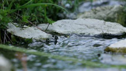 Close up of grass and rocks in water stream