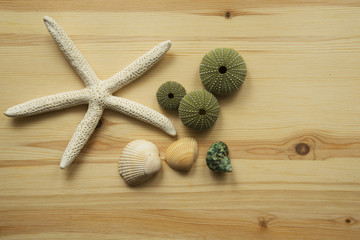 shells and starfish on wooden cutting board