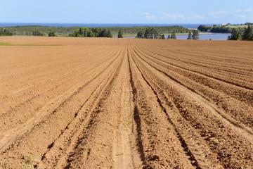 Plowed Field in Spring with Views of Ocean