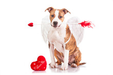 """Постер, картина, фотообои """"Puppy dressed as a valentine cupid holding an arrow in his mouth"""""""