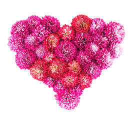Chrysanthemums flowers heart