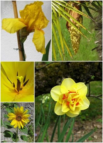 Foto op Canvas Iris fleurs
