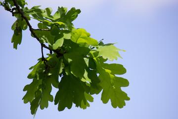листья на фоне неба