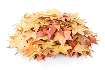 Autumn leaves heap isolated on white, clipping path