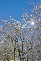 Bäume in der Wintersonne
