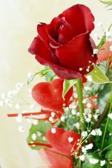 Rosa rosa con cuori - San Valentino