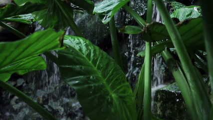 Leafs of a big palm in front of waterfall