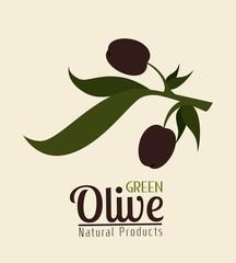 Olive oil design, vector illustration.