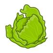 green cabbage cartoon isolated illustration