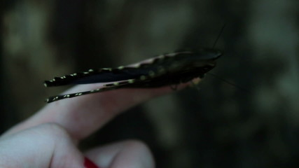 Close up of a butterfly on a finger