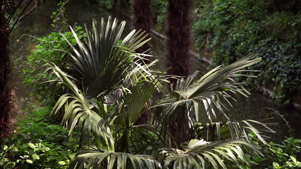 Shot of a palm tree in garden