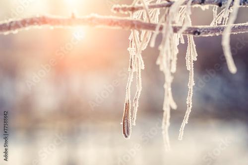 Leinwanddruck Bild Hoarfrost on the tree in winter forest