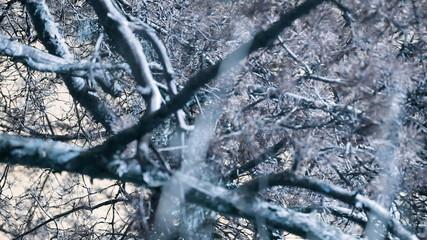 Still shot of tree branches