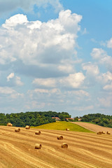 Newly harvested hay bales in an agricultural field