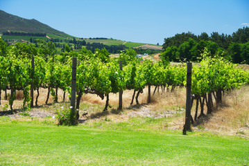 South Africa vineyard valley landscape