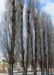arbres...hiver