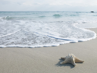 Sand and waves and starfish