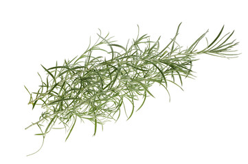 Helychrysum