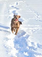 Hunde laufen im Schnee