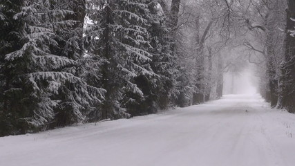Winter snowy road with alley of bare old trees and  fog