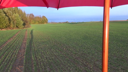 farmer shadow on  evening crop field and red umbrella