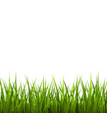 Fotoroleta Green grass lawn isolated on white. Floral nature spring backgro