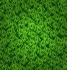 Green grass texture. Floral nature spring background