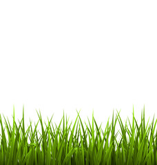 Green grass lawn isolated on white. Floral nature spring backgro