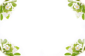 Green leaves and flower  frame isolated on white background